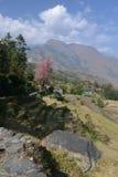 村庄和绿色和五颜六色的米领域大阳台,尼泊尔鸟瞰图  免版税图库摄影