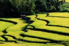 村庄在玉米田 库存图片