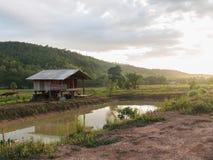 村庄在米领域中间设置 免版税库存照片