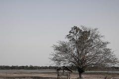 村庄是老腐朽的树 库存图片