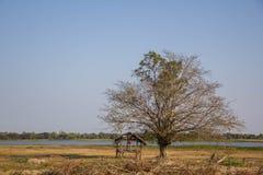 村庄是老腐朽的树 免版税库存照片
