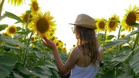 村庄暑假,女孩享受在领域的乡下秀丽用在背后照明的向日葵 股票录像