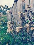 村庄植物 库存图片