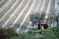 村庄法国开胃菜小的葡萄园 库存照片