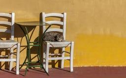 村庄猫 库存照片