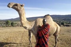 村庄生活Maasai,人和独峰驼画象  免版税库存图片