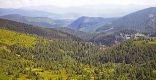 村庄的绿色冷杉木和房子以喀尔巴阡山脉为背景的 免版税库存照片
