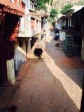 村庄的长的步行 库存图片
