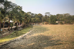 村庄领域在Bagerhat,孟加拉国 免版税库存照片