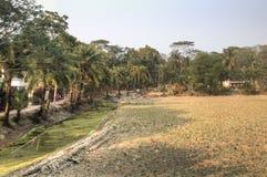 村庄领域在Bagerhat,孟加拉国 库存照片