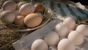 村庄鸡蛋 库存图片