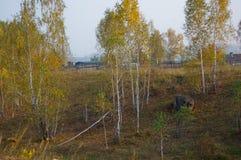 村庄,西伯利亚 免版税库存图片
