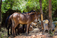 村庄驴 图库摄影