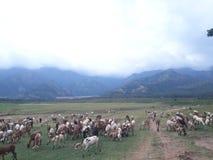 村庄 图库摄影