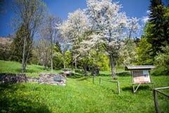 村庄Kaliste,斯洛伐克废墟  免版税库存照片