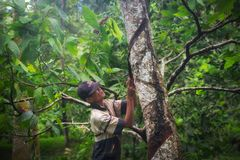 村民与一把刀子一起使用在印度尼西亚 库存照片