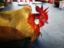 村民是的捕获鸡 免版税库存图片