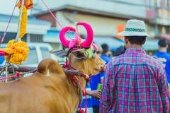 村民装饰Songkran节日的母牛在干乍那 免版税库存图片