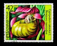 杓兰calceolus花,兰花serie,大约1986年 免版税库存照片