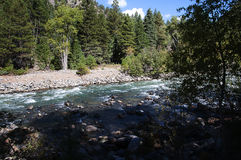 从杜兰戈的窄片铁路通过落矶山由河生命负责在科罗拉多美国的Silverton的 库存图片