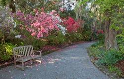 杜娟花庭院和长凳 免版税库存照片