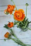 杜娟花开花浅关闭dof的花出现 库存照片