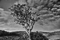 杜娟花树 库存图片