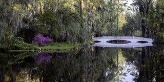 杜娟花桥梁和池塘 库存照片