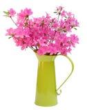 杜娟花绿色水罐粉红色 库存图片