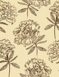 杜娟花花卉模式无缝的向量 库存图片