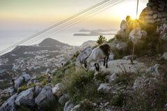 杜布罗夫尼克山羊 免版税库存图片