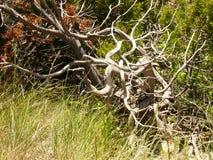 杜松最基本的刘易斯&克拉克洞穴 免版税库存照片