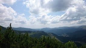 杜松树在多云天空下 免版税库存照片