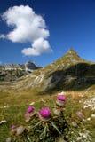 杜米托尔国家公园圆环 库存照片