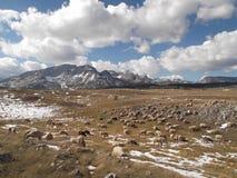 杜米托尔国家公园山在秋天 免版税库存照片