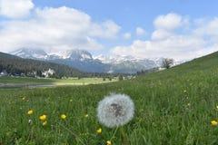 杜米托尔国家公园山的春天全景 库存图片