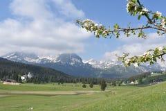 杜米托尔国家公园的春天全景 库存图片