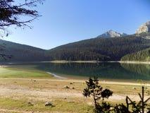 杜米托尔国家公园的美丽的黑湖在黑山 免版税库存照片