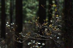 杜鹃花分支在深绿森林里,关闭 阳光 被弄脏的背景 免版税库存照片