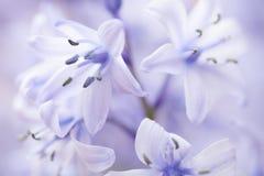 结束一些一棵会开蓝色钟形花的草 库存照片