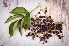 束与叶子的新鲜的接骨木浆果在老木背景,健康食物 图库摄影