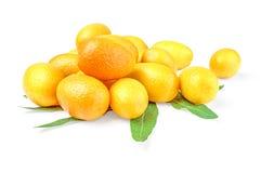 束与叶子的金桔cumquat在白色背景 免版税库存图片