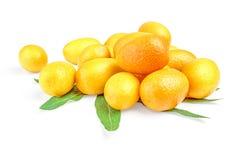 束与叶子的金桔cumquat在白色背景 免版税图库摄影