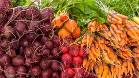 束与束的红萝卜甜菜 库存照片