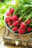 束与水下落的新鲜的有机红色萝卜在被风化的木庭院箱子草本阳光干净吃的铝碗 图库摄影