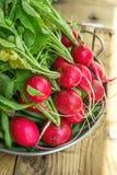 束与水下落的新鲜的有机红色萝卜在被风化的木庭院表上的铝盘在阳光下 免版税库存照片