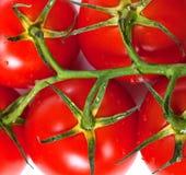 束与水下落的新鲜的蕃茄 库存图片