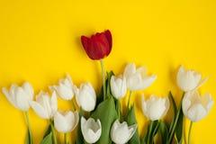 束与红色一的白花 免版税图库摄影