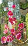 束与金黄分支装饰的桃红色花在泰国巴拉 库存图片