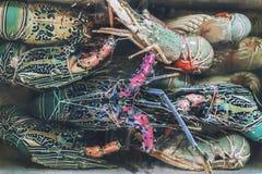 束在地方鱼市在Jimbaran, Bal上的新鲜的龙虾 库存图片